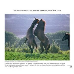 99-photos-pour-aimer-les-chevaux-1