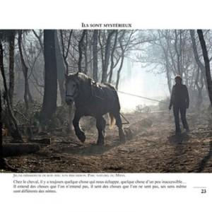 99-photos-pour-aimer-les-chevaux-2