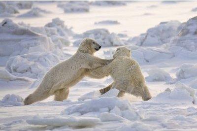 antartic2